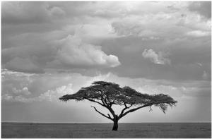 tanzania162 Tanzania: An African Success Story?